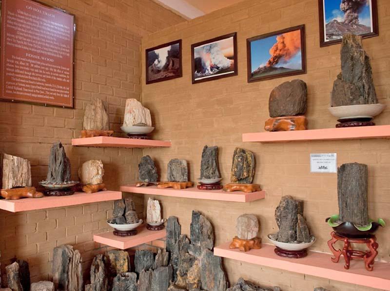 Срубы деревьев Фукуока в Музее Coi Nguon