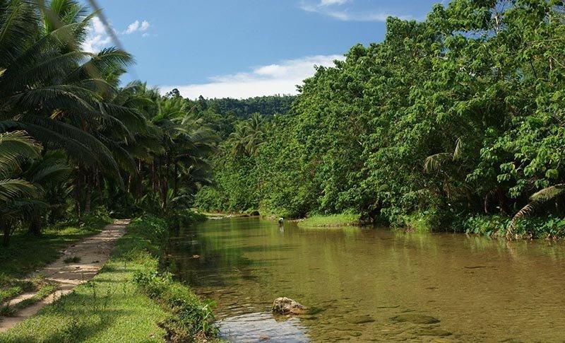 Заросли озера Dương Đông