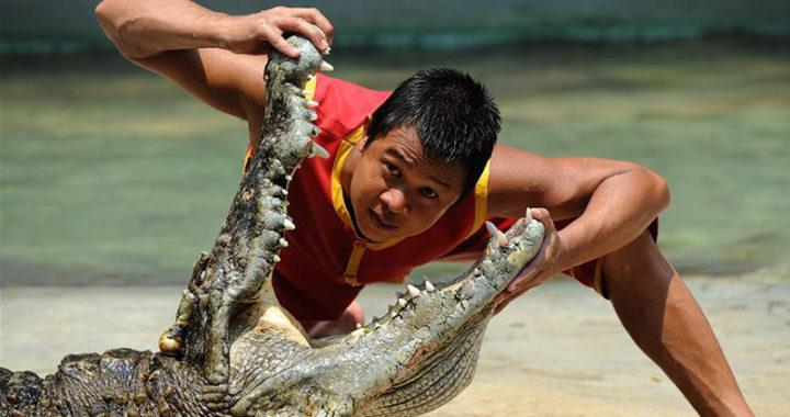 Крокодиловая ферма на Фукуоке: как добраться и сколько стоит