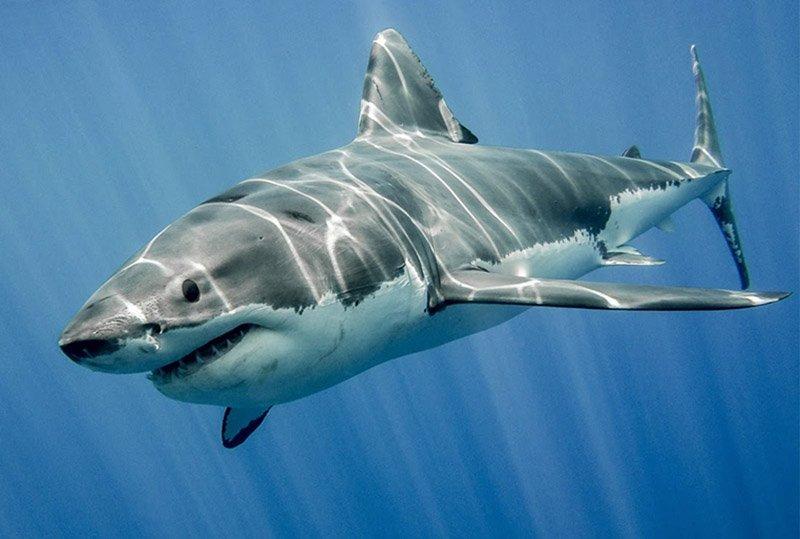 Акулы на Фукуоке