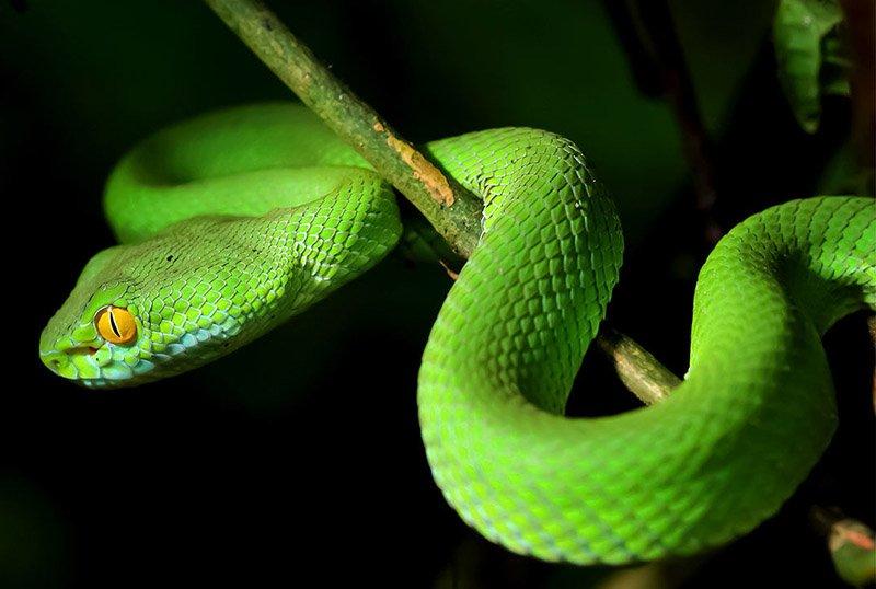 Змеи на Фукуоке