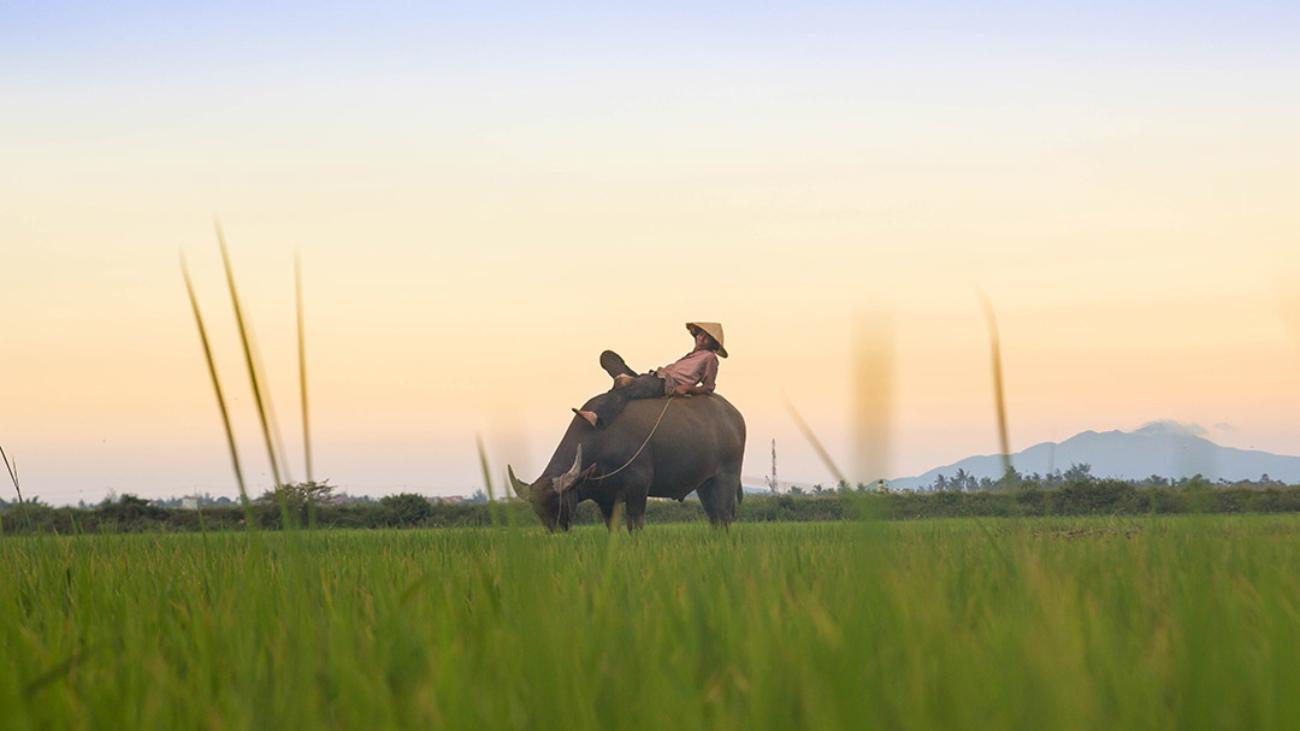 Приглашение во Вьетнам: рабочее и туристическое